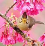birds5-3